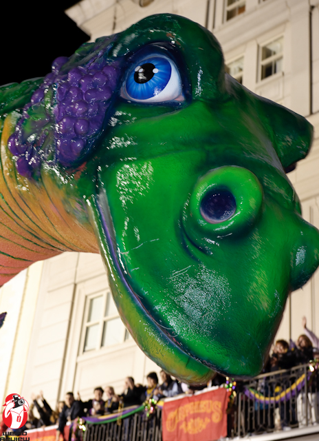 This beautiful Bacchus Beastie overshadows a star studded balcony <BR>-PhotobyCaptainBrian